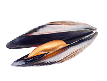 Bivalve molluscs